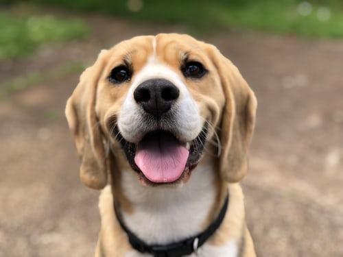 Hondengeur verwijderen lastig? De oplossing is dichterbij dan je denkt